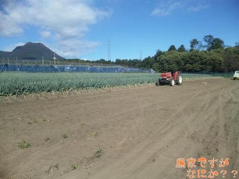 20111004 第1−1 長ねぎ収穫終了.JPG