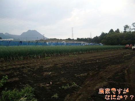 20111009 第1-2 長ねぎ収穫.JPG
