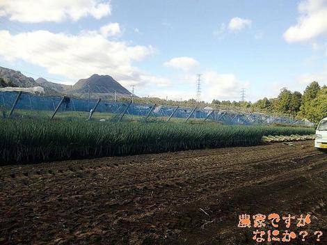20111026 第1-2 長ねぎ収穫再開.JPG