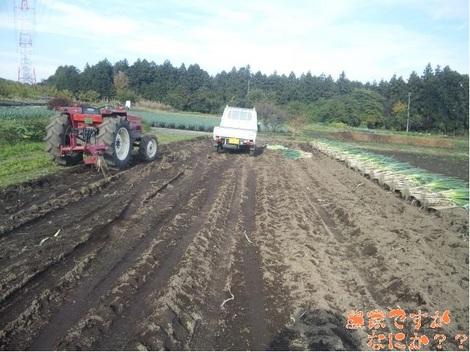 20111114 第9長ねぎ収穫終了.jpg