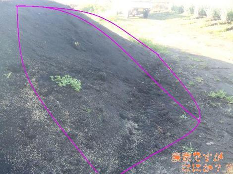 20111124 堆肥.JPG