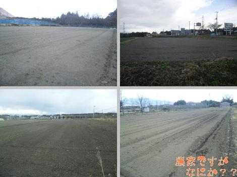 20120103 畑の様子1.jpg