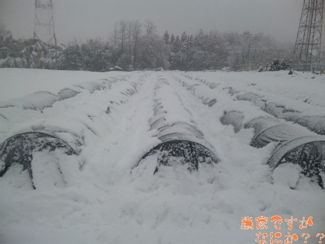 20120120 トンネルねぎ.jpg