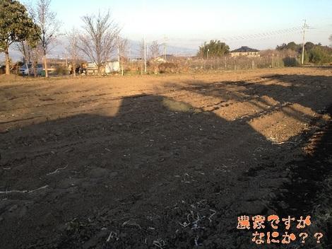 20120131 収穫終了.jpg