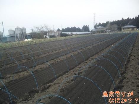20120309 下仁田ネギ播種.jpg