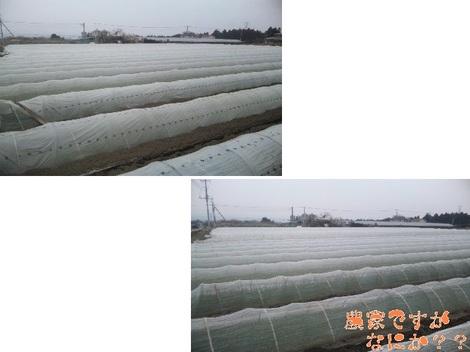 20120324 苗床潅水.jpg