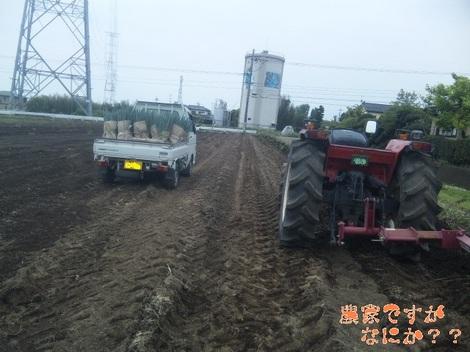 20120517 長ねぎ収穫終了.jpg