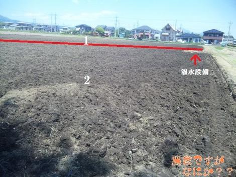 20120520 吉岡圃場.jpg