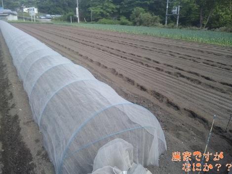 20120525 長ねぎ播種.jpg