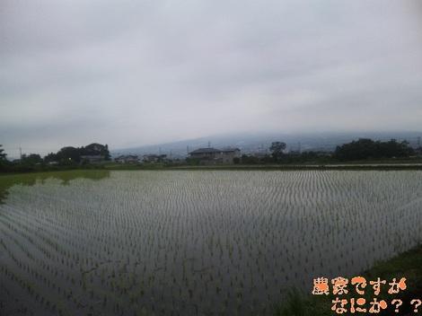 20120613 田植え.jpg