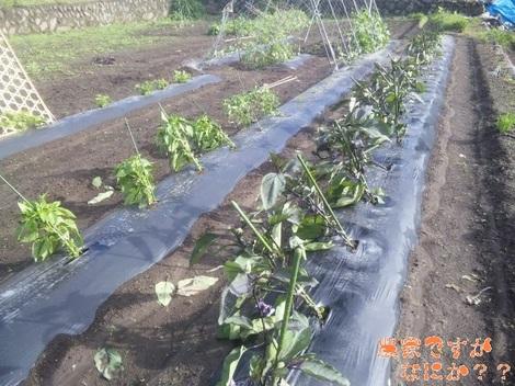 20120620 自家用野菜.jpg