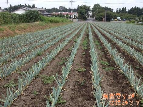 20120821 第7下仁田ネギ.jpg