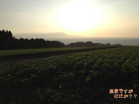 20120828 そば畑.jpg