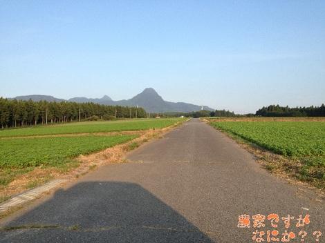 20120828 そば畑2.jpg