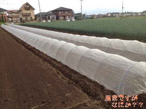 20121011 長ねぎ播種.jpg