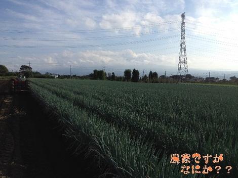20121013 8-2長ねぎ収穫.jpg