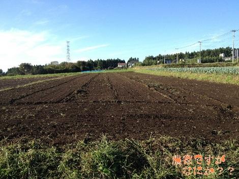 20121018 畑.jpg