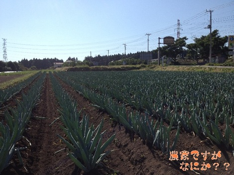 20121021 下仁田ネギ第3.jpg