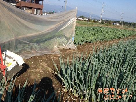 20121024 吉岡第1養生.jpg