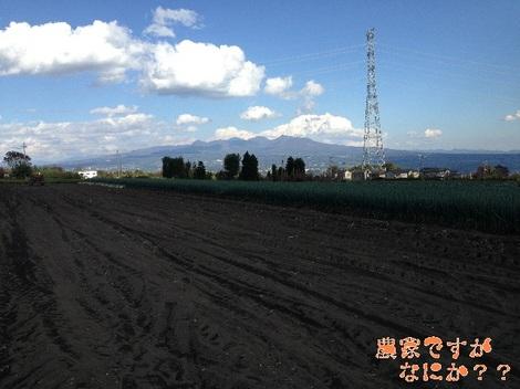 20121109 第8-3長ねぎ.jpg