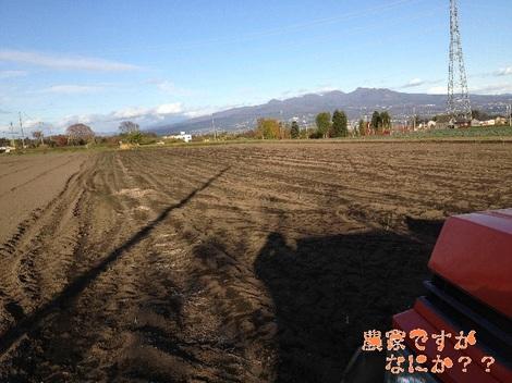 20121126 長ねぎ収穫終了.jpg