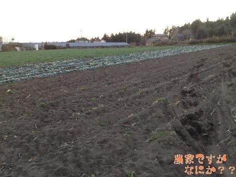 20121211 第2下仁田ネギ収穫終了.jpg
