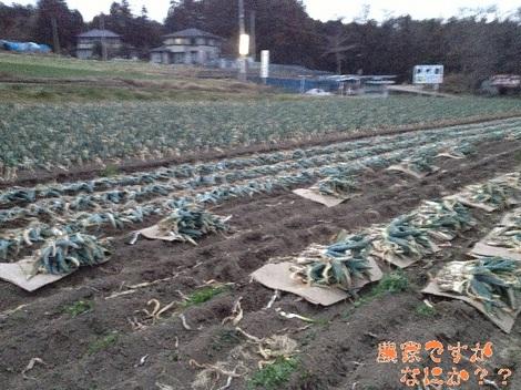 20121218第3下仁田ネギ.jpg