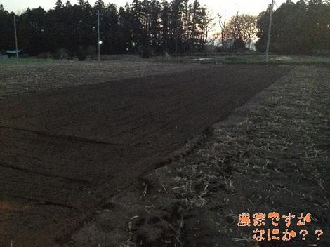 20130107新しい畑.jpg