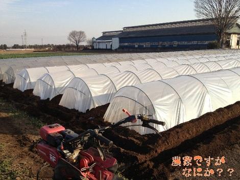 20130109トンネルねぎ.jpg