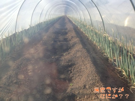 20130225トンネルねぎ .jpg