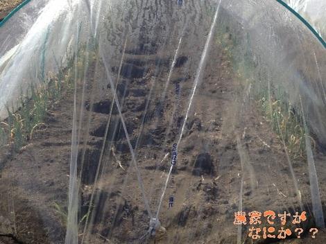 20130225トンネルねぎ 法人.jpg