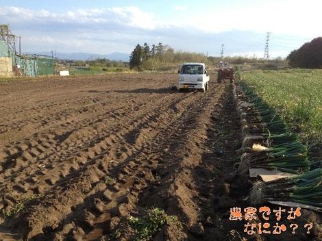 20130428 長ねぎ収穫終了.jpg