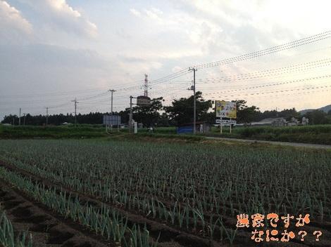 20130712第3下仁田ネギ.jpg