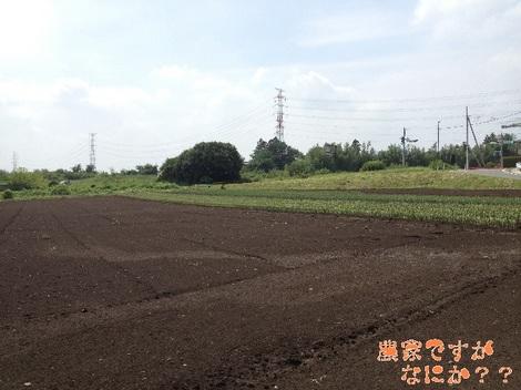 20130901長ねぎ定植.jpg