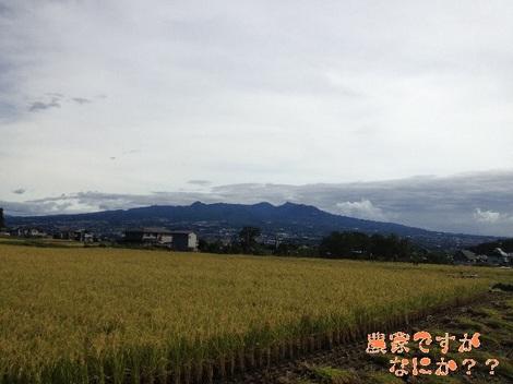 20130927稲刈り.jpg