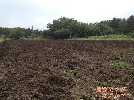20130930畑2.jpg