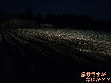 20131212第1下仁田ネギ.jpg