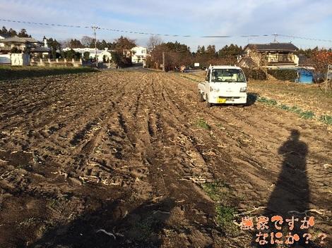 20131212第7下仁田ネギ.jpg