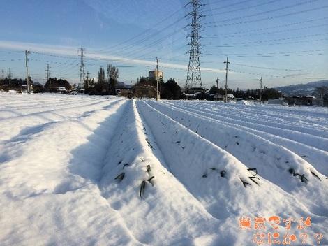 20140221ねぎ畑.jpg