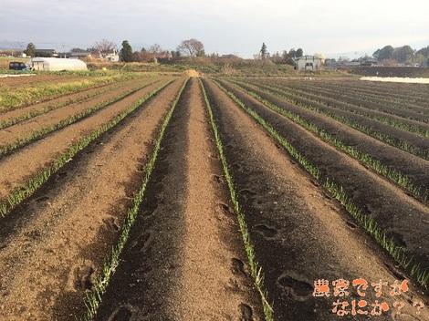 20140402農家A.jpg