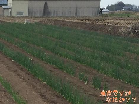 20140402農家B.jpg