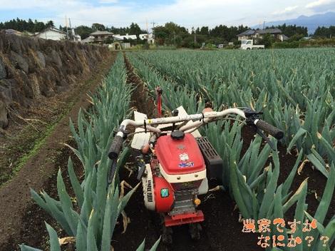 20140920下仁田ネギ土寄せ8管理機.jpg
