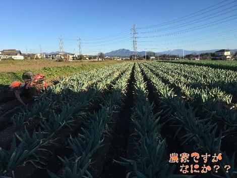 20151212下仁田ネギ.jpg