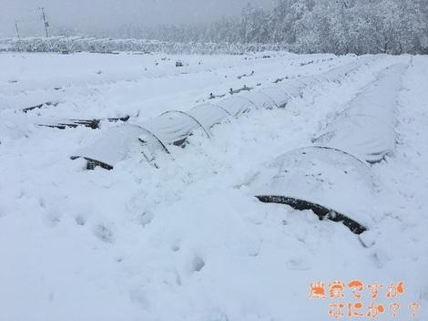 20160204雪.jpg
