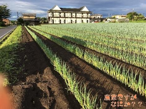20160617新井1.jpg