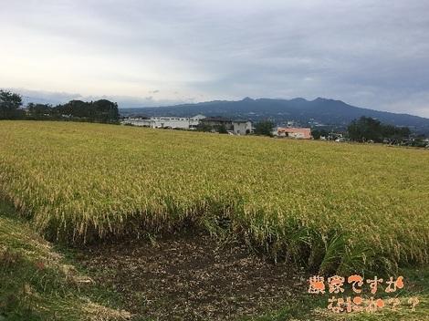 20161010稲刈り.jpg