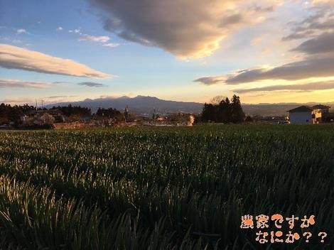 20170105収穫.jpg