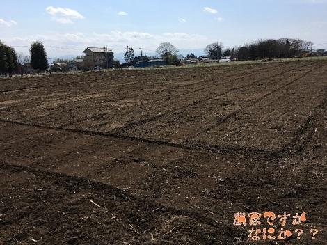 20170516畑2.jpg