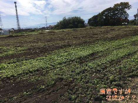 20171102農地5後.jpg