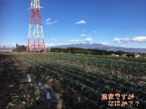 20171223下仁田ネギ畑.jpg